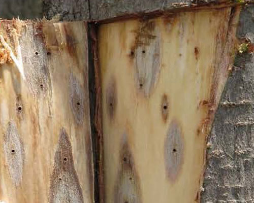 Holes in tree trunks